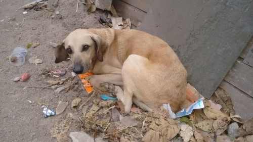Noticia abandono-de-animais-e-crime